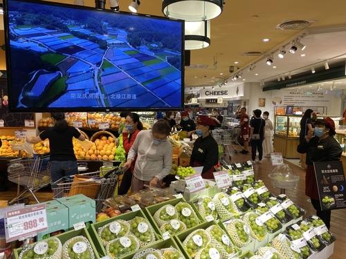 資料圖片:走向中國高端水果市場的韓產陽光玫瑰葡萄 農水產食品流通公社供圖(圖片嚴禁轉載複製)
