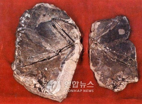 朝鮮發現1.3億年前中生代鳥類化石