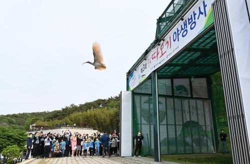 朱鹮振翅高飛。 韓聯社