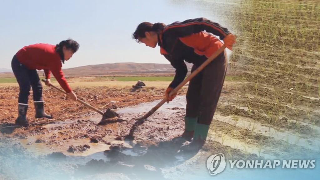資料圖片:朝鮮婦女種地。 韓聯社