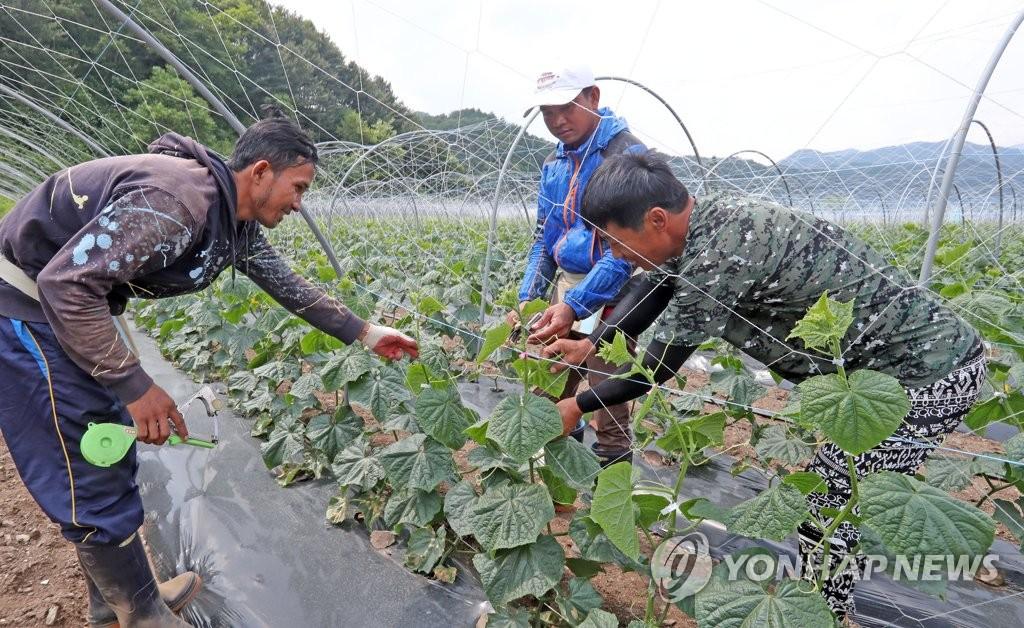 南韓面向境內外國人限時放開季節工市場