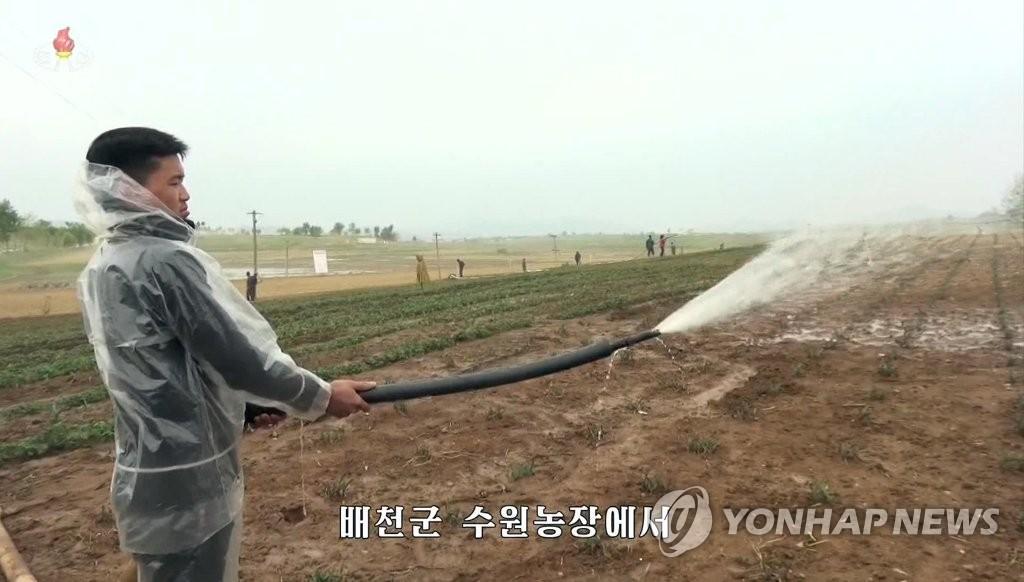 朝媒稱朝鮮旱情嚴重秋收堪憂