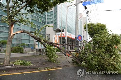 南韓氣象廳發佈全國強風預警