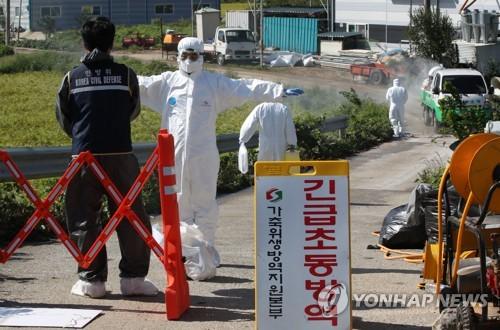 朝媒報道南韓非洲豬瘟疫情消息