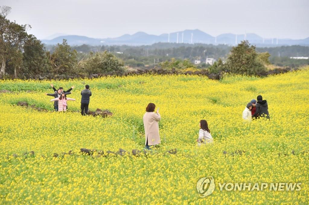 冬日�堛漯o菜花田