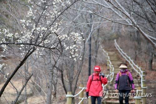 南韓去年冬季平均氣溫創1973年以來最高