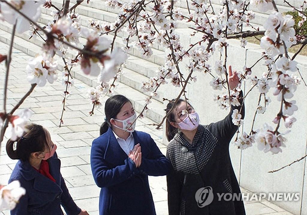 朝鮮居民戴口罩賞花
