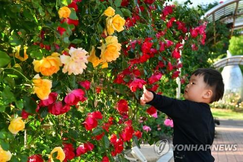萬朵玫瑰齊盛開