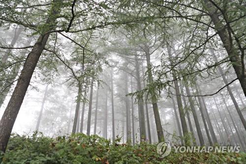 林間雲霧繚繞