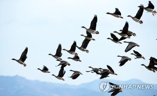 鴻雁列隊飛過
