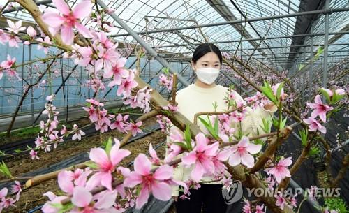 桃花朵朵開