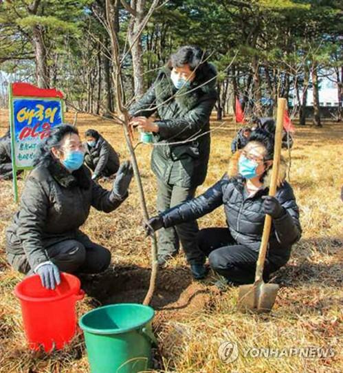朝鮮展開植樹活動