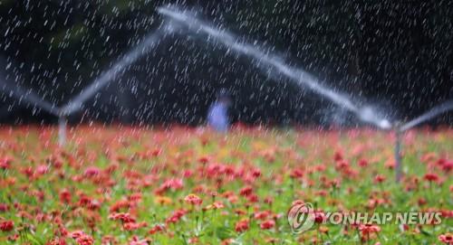 給百日紅園區澆水