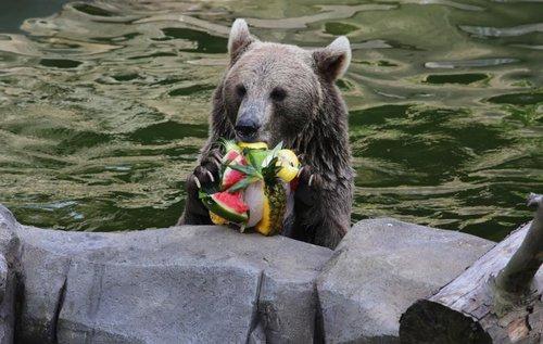 黑熊的盛夏美味