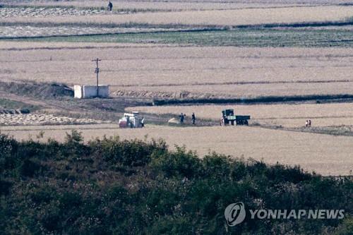 朝鮮居民收割水稻