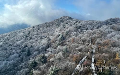秋葉配雪景